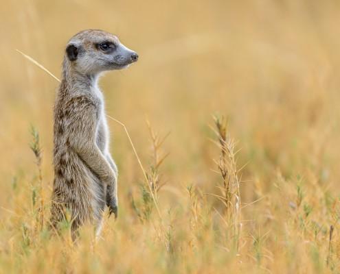 tailor made safaris Botswana