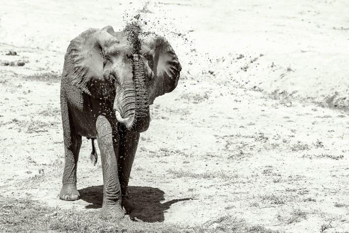 photo safari in Zambia, mfuwe, southern luangwa national park