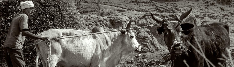 un contadino negli altipiani etiopi