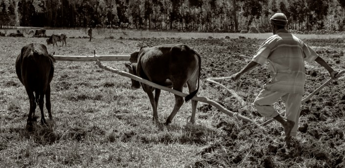 foto in bianco e nero,Arare il campo in Etiopia