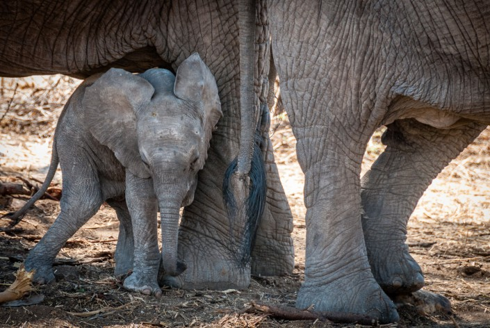 Baby Elefant im Ruaha National Park