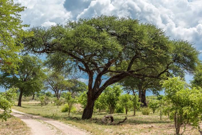landscape in the Hwange NP
