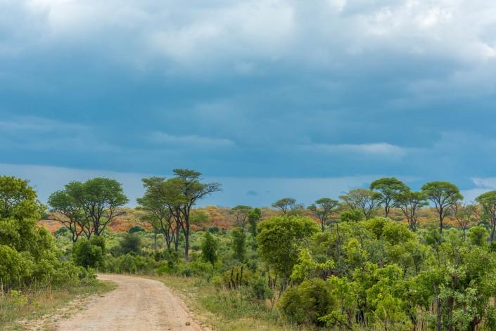 hwange Nationalpark Landschaft vor dem regen