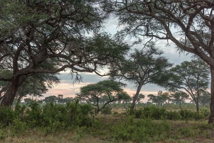 hwange np zimbabwe morning