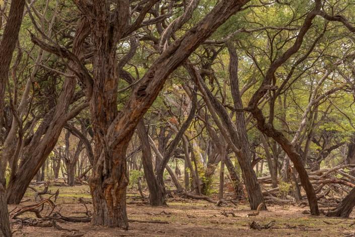 Hwange Nationalpark