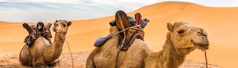 Senegal, die Wueste Lompoul und Kamele fuer Ausritte