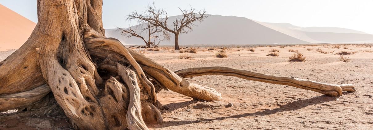 Nel deserto del Namib