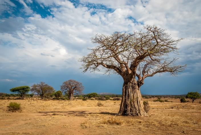 Tansania-Reise, Serengeti, Ngorongoro, Ruaha, Selous, Mafia,