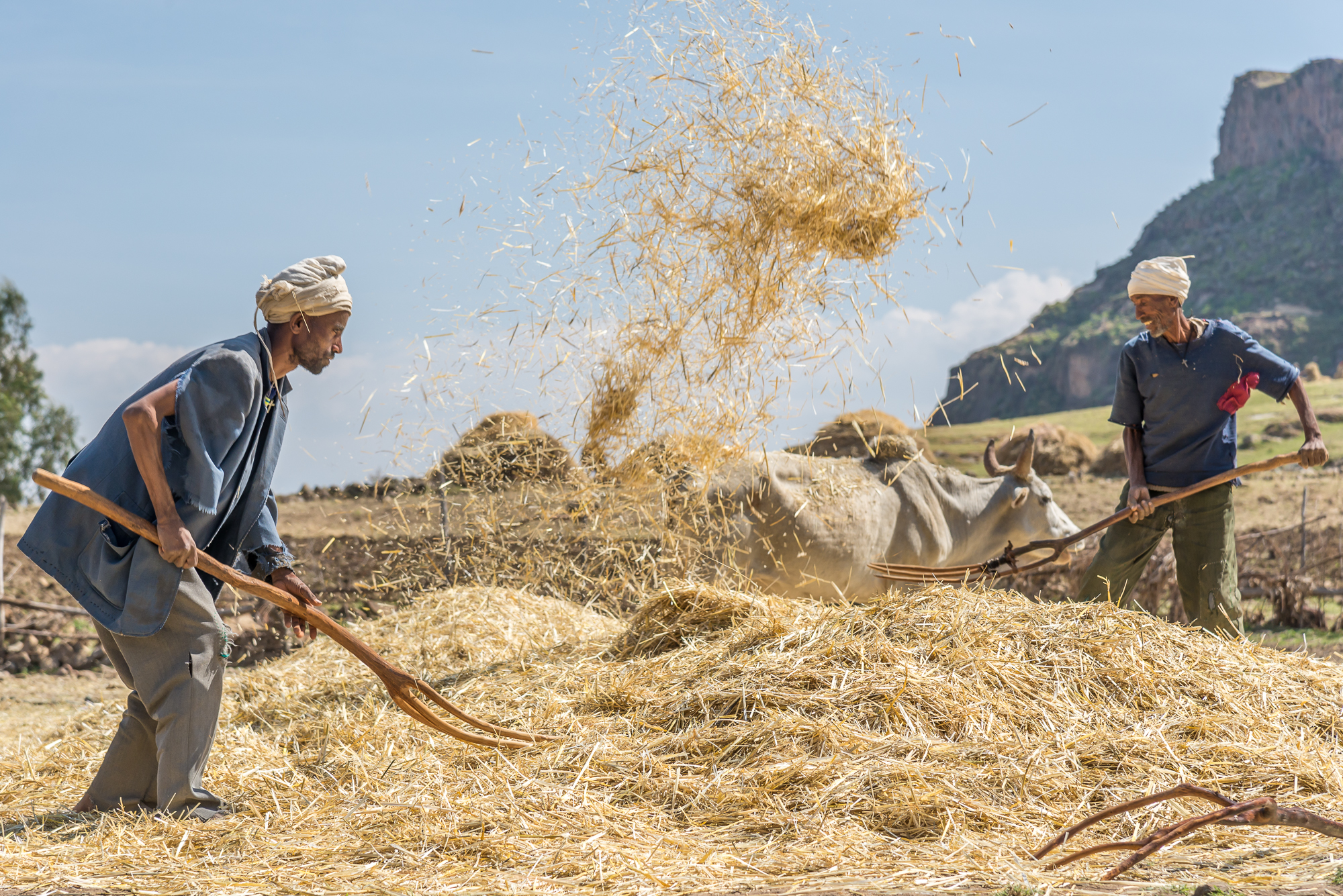 ethiopia, farming in the highlands