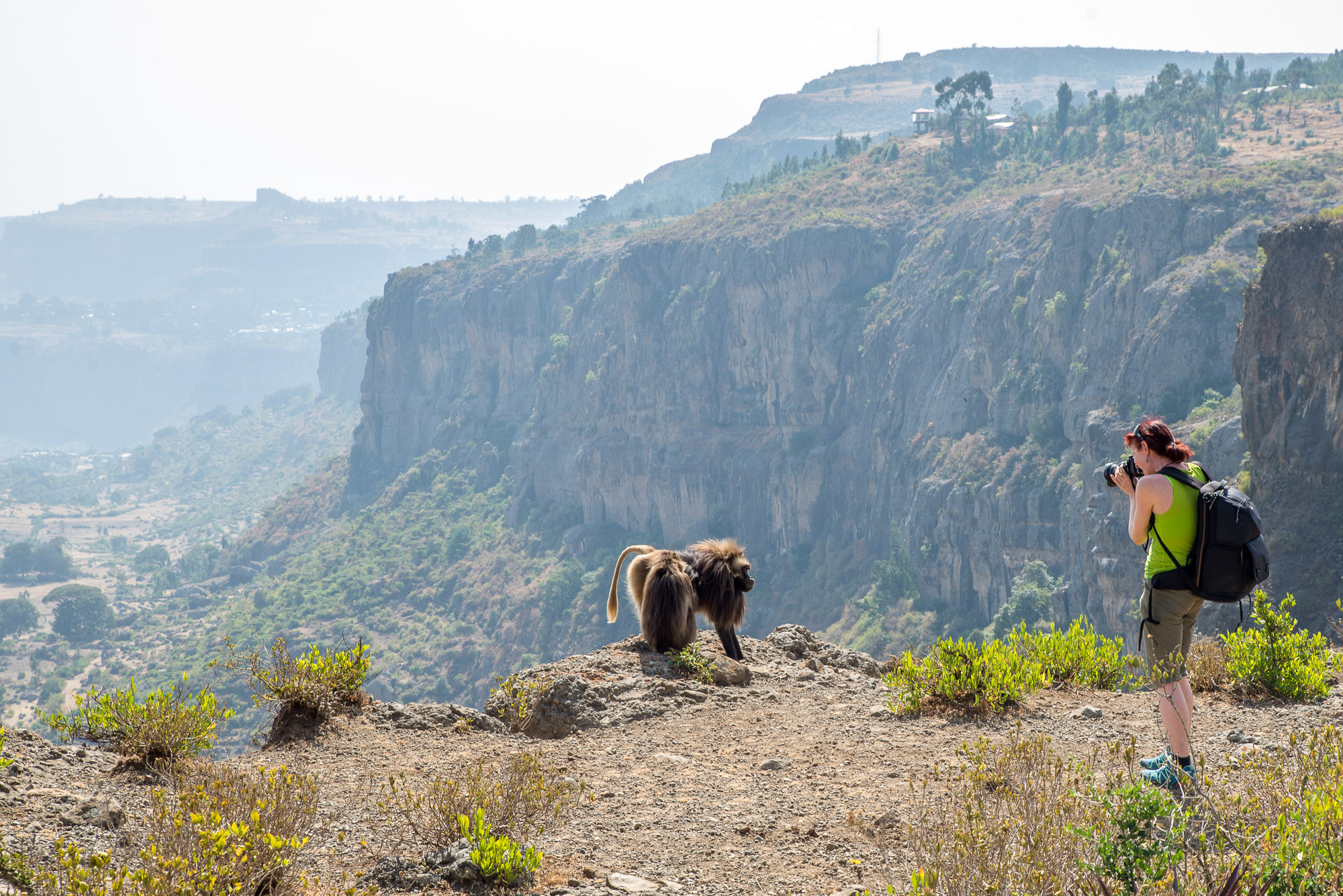 ethiopia, travel photographer taking pictures with apes