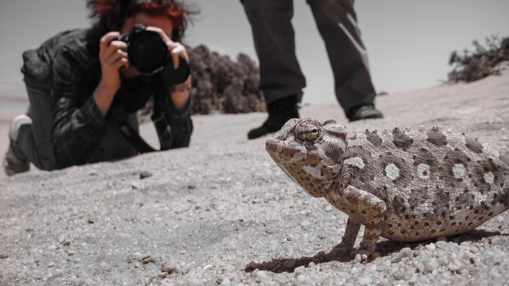 catherina unger photographing a chameleon