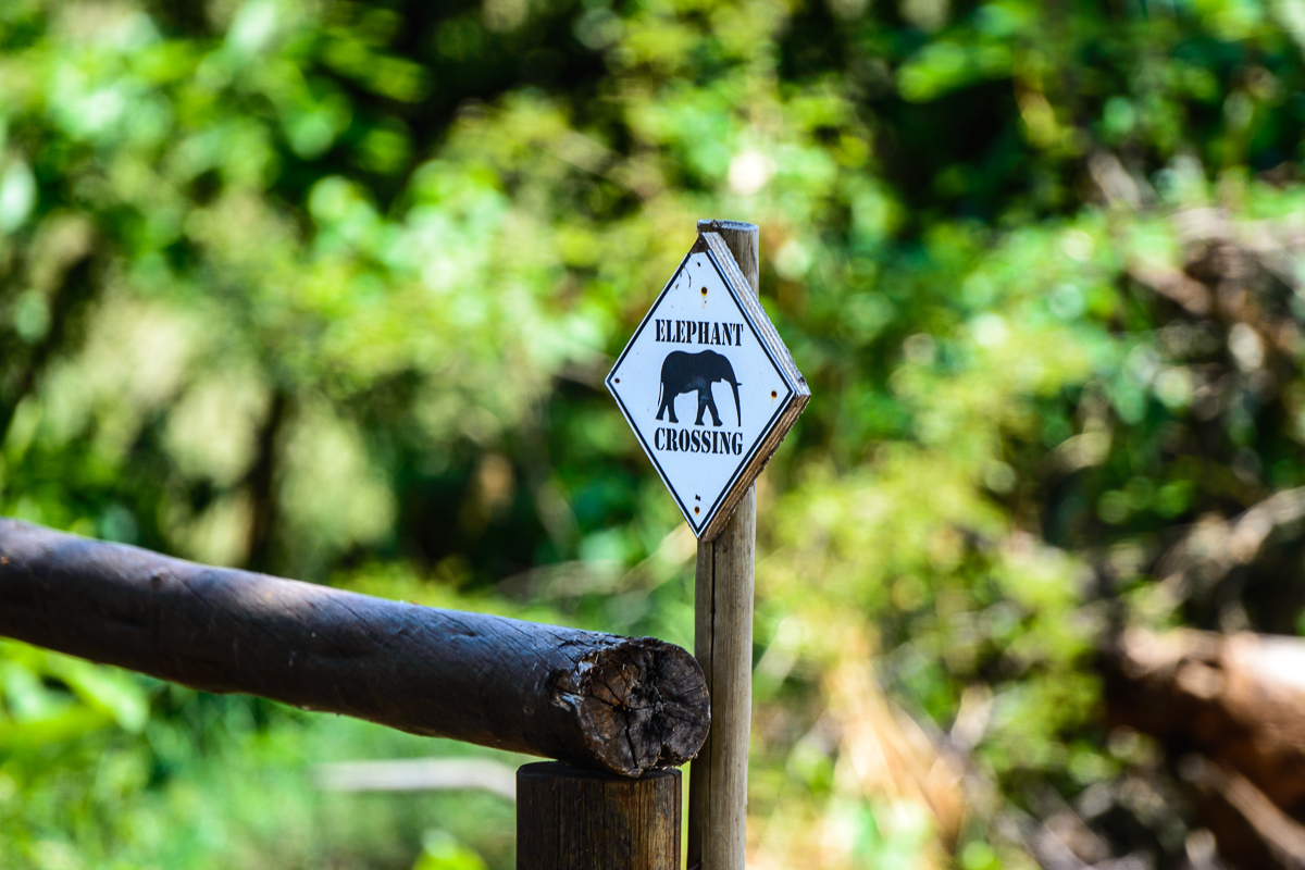 cartello passaggio elefanti