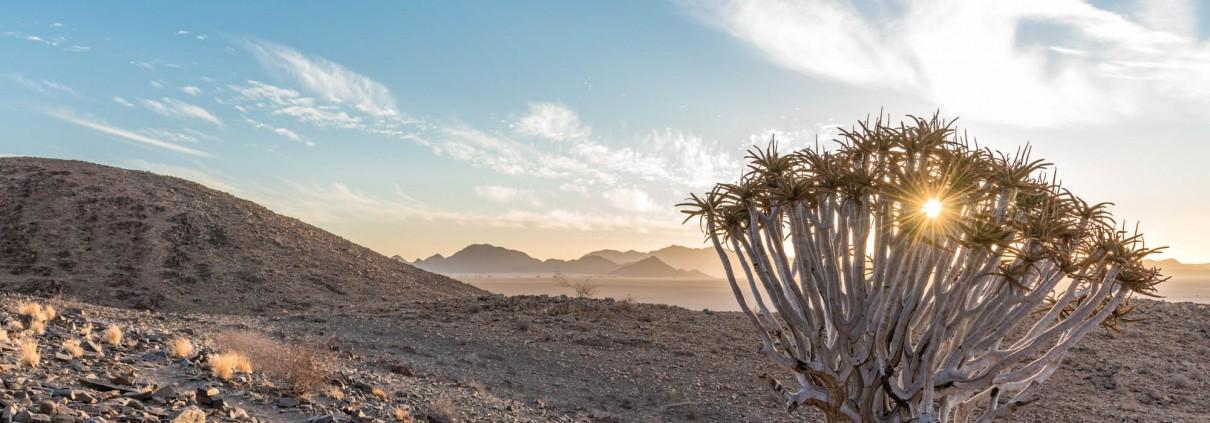 Il solo tramonta dietro un albero faretra, Namibia