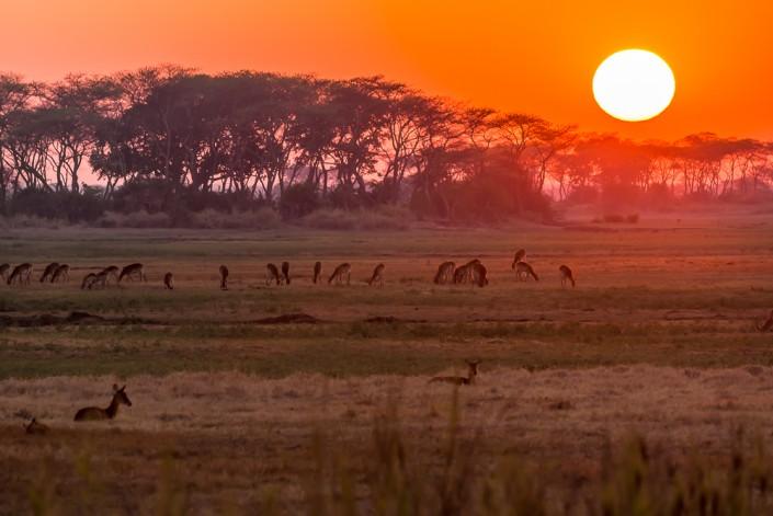Alba nel kafue national park zambia
