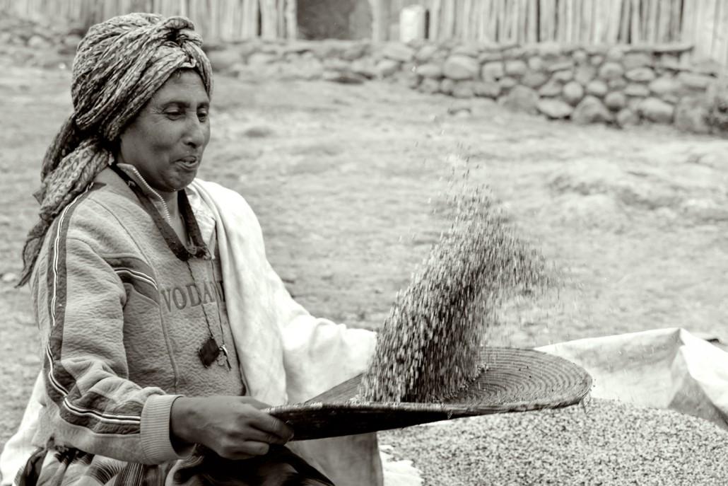 Ritratto di una donna in bianco e nero che prepare i cereali, etiopia