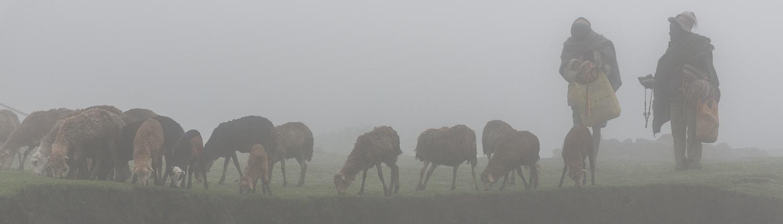 altipiani dell'etiopia, nella nebbia