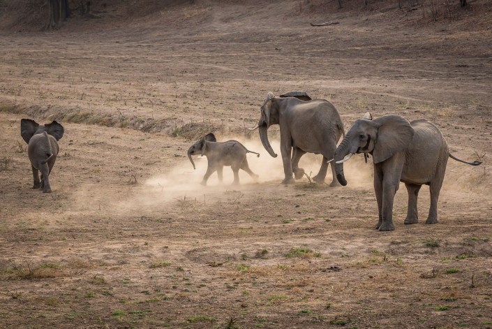 Zambia, South Luangwa NP, elephants