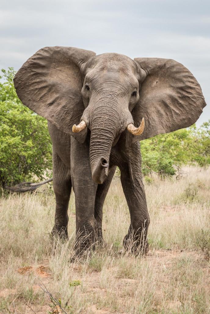gonarezhou Nationalpark, elefant