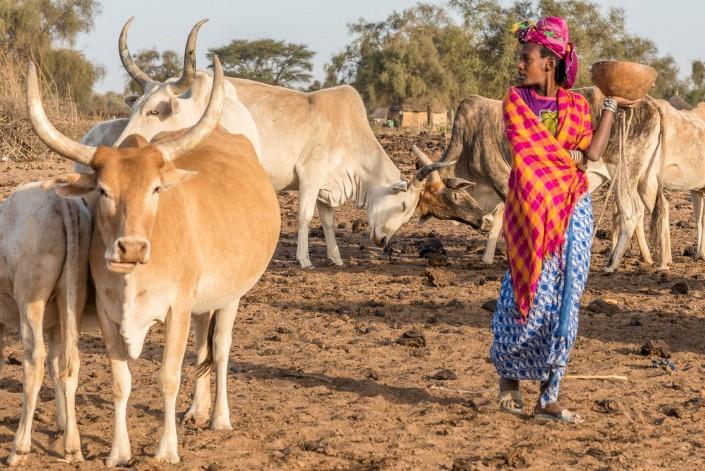 Kühe und Frau bei den Peulh in Nordsenegal