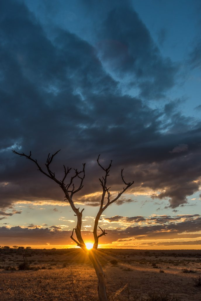 sunset with dead tree in namibia