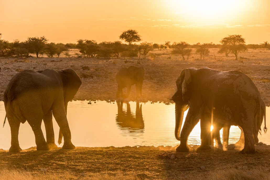 sunset at Okaukuejo with elephants