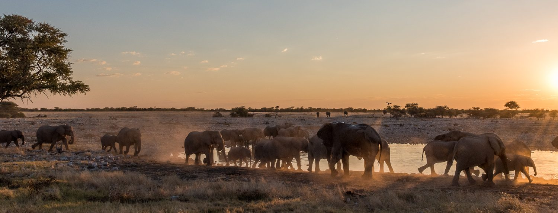 Okaukuejo, Etosha, Namibia