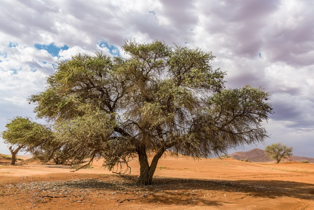in the dunes of sossusvlei in the namib