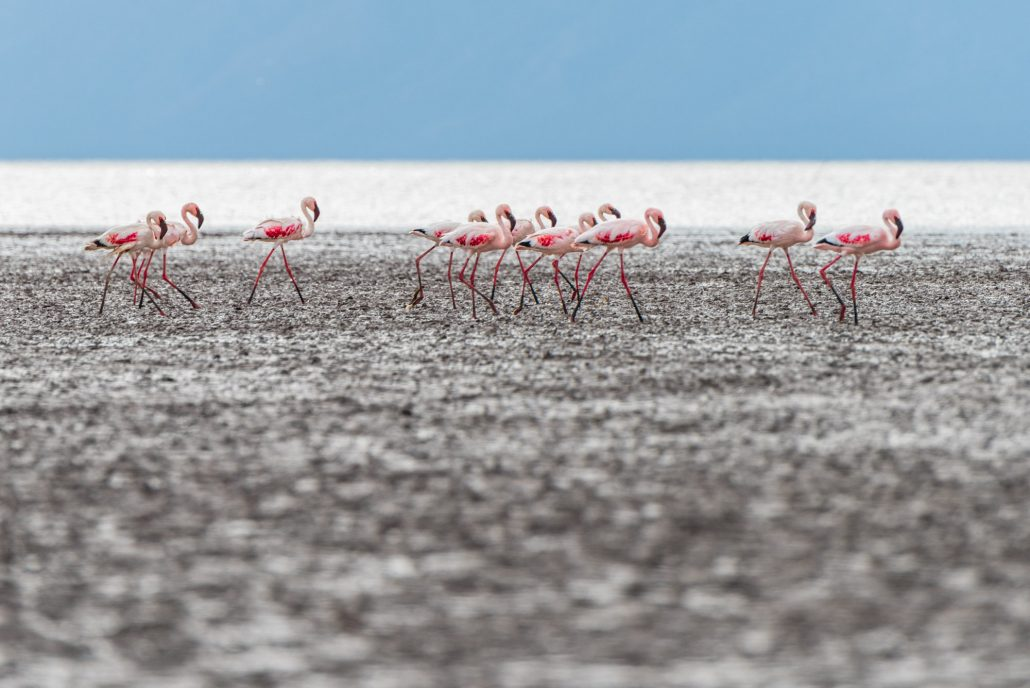Lake Eyasi, Tanzania, flamingos
