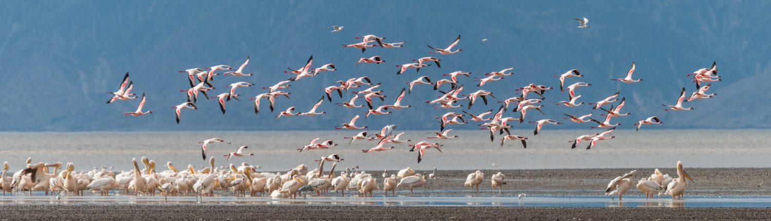 Lake Eyasi with flamingos and pelicans