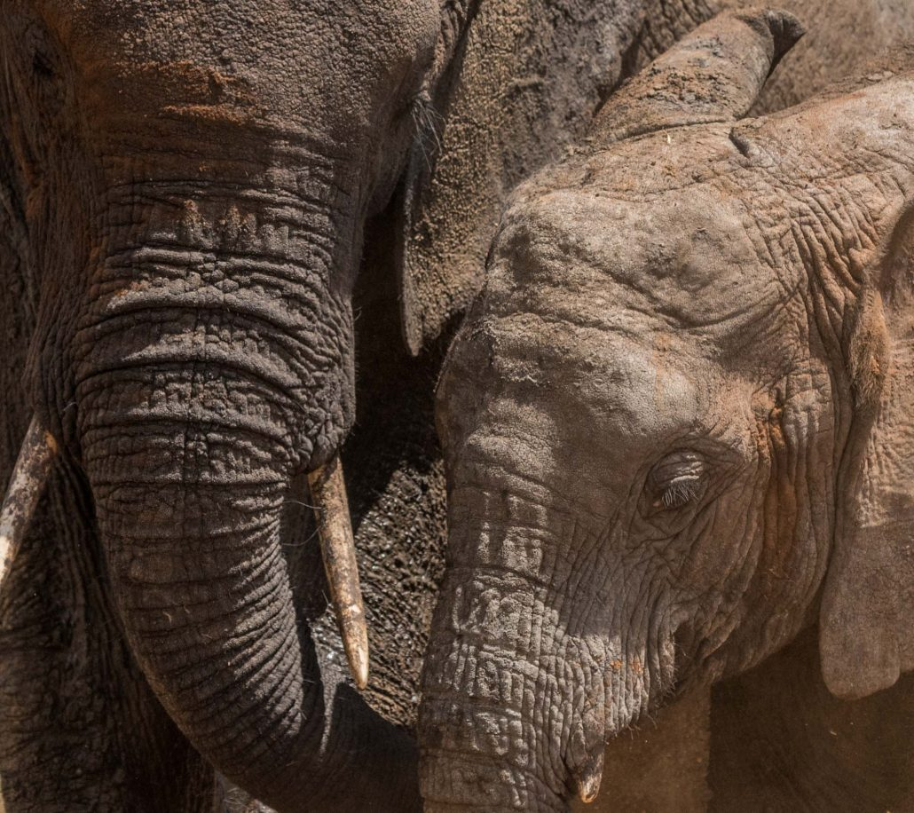 Africa, Tanzania, Tarangire national park, an elephant mother with her child
