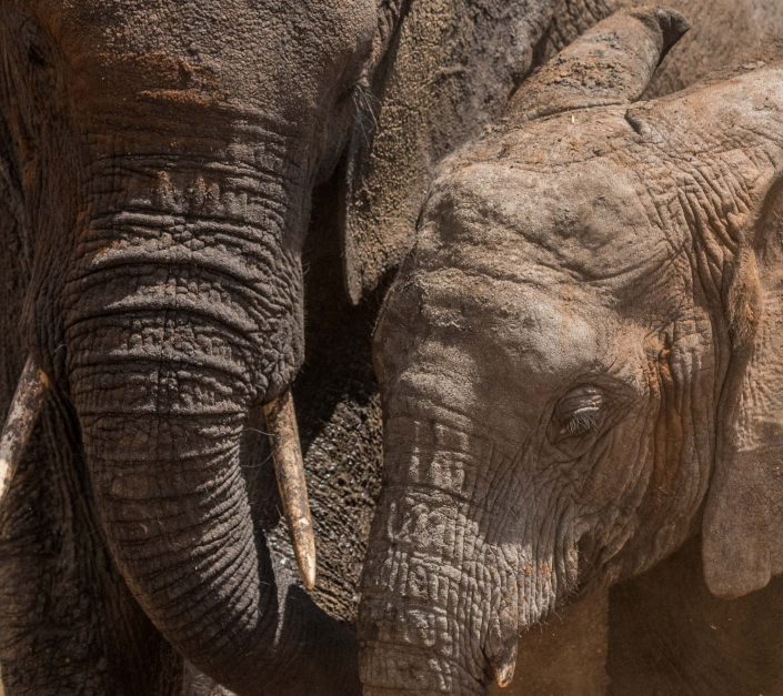 Africa, Tanzania, Tarangire national park, an elephant mother with her child