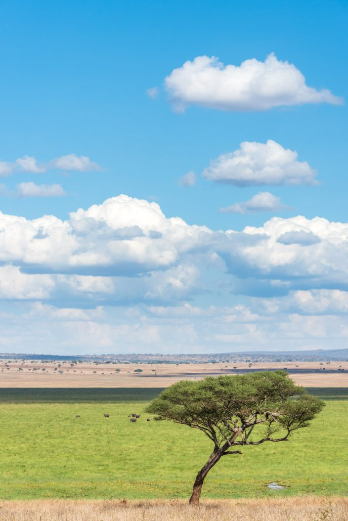Africa, a scenic view over the swamp area of the tarangire national park