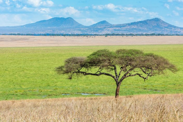 a scenic view over the swamp area in the tarangire national park in tanzania