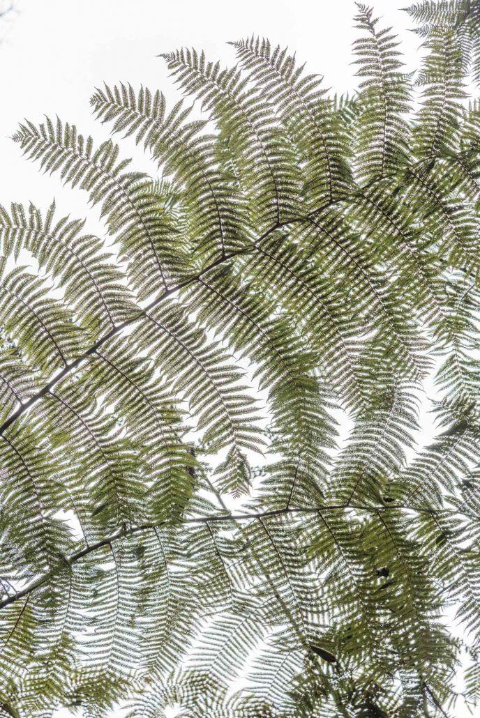 fern artwork in the usambara mountains