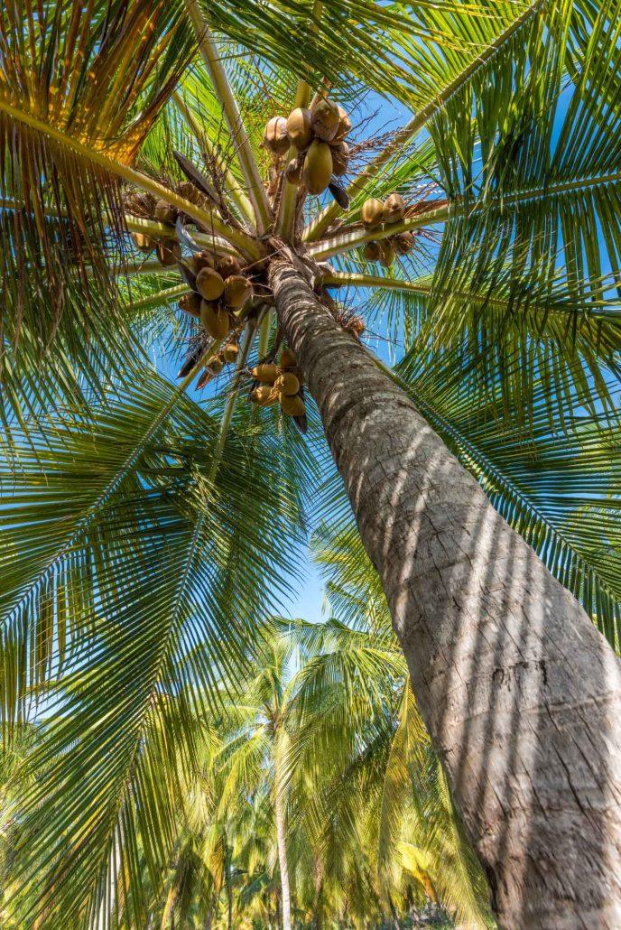 palms in Songo Mnara tanzania