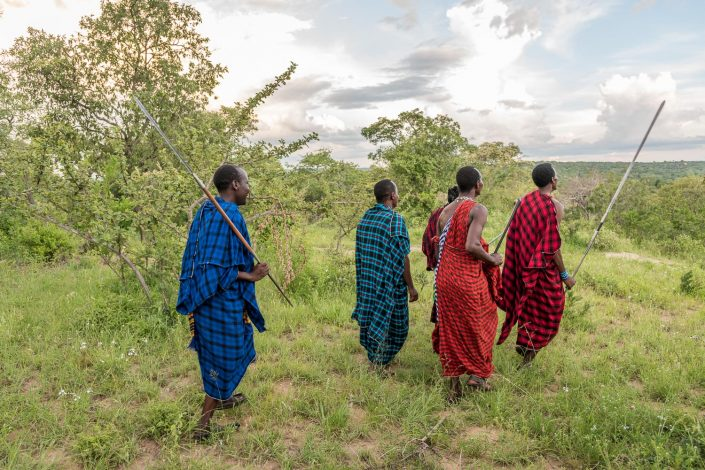 traditionally dressed maasai men walking in the Savanna, n Maasailand