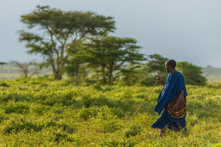 a Maasai man in Tanzania, Walking in the Savanna