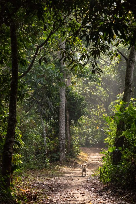 on the footpath to the waterfalls, Volta region, Ghana
