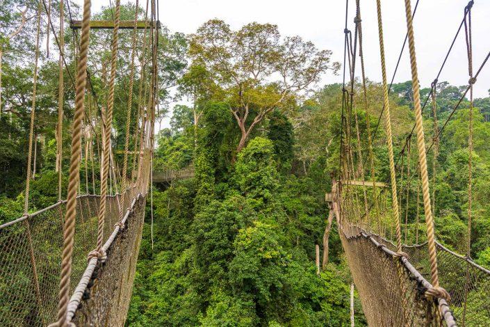 the Kakum National Park, Ghana