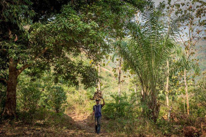 africa, togo, rainforest