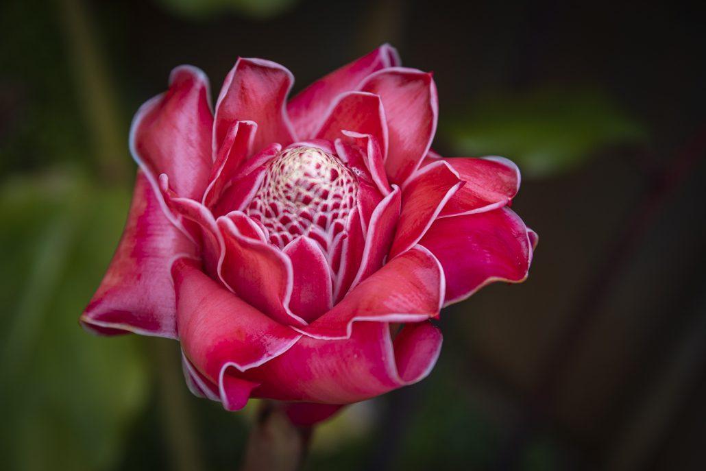 Porcellain flower