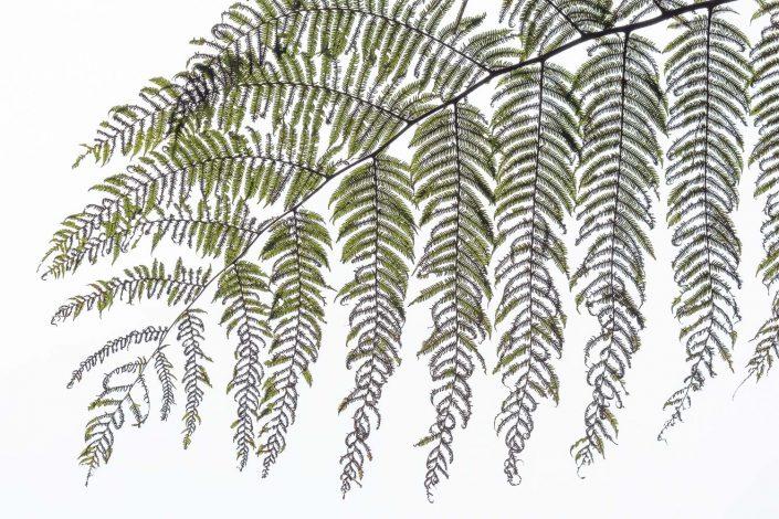 plant sao tome