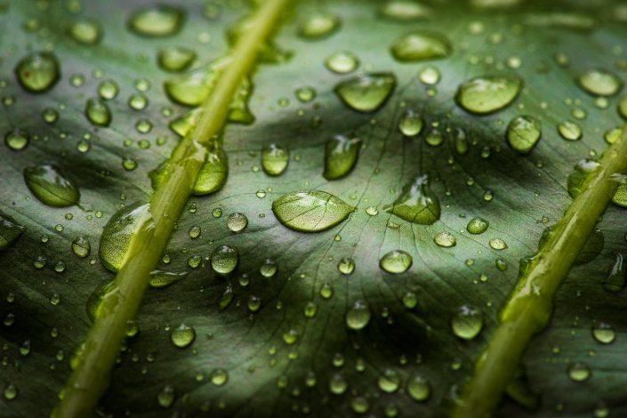 close up leaf Sao Tomè